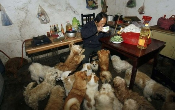 Chinese-man-rescues-adopts-140-dogs-3_2014-10-23_20-31-08-589x371
