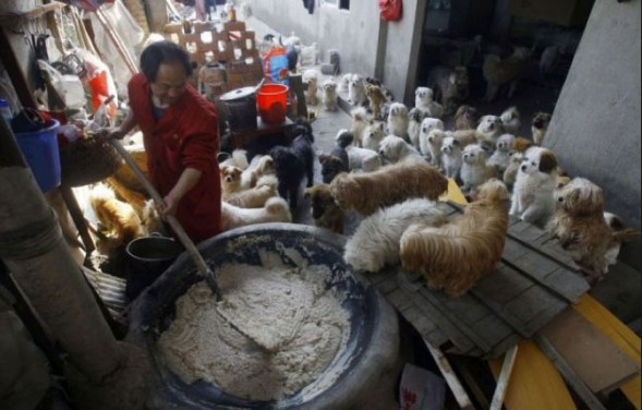 Chinese-man-rescues-adopts-140-dogs-4_2014-10-23_20-31-12-589x376
