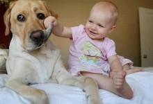 Θα λιώσετε! Μικρά μωρά αγκαλιά με μεγάλους σκύλους