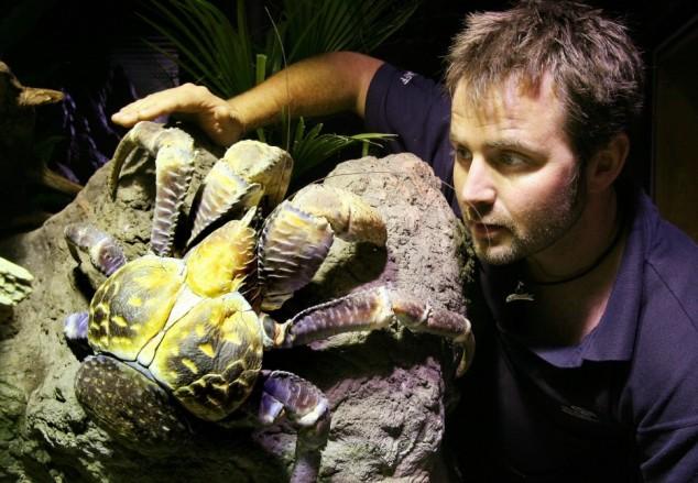 An employee of the Melbourne Aquarium ta