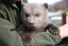 H iSquare υποστηρίζει την ανατροφή του Πάτρικ, της ορφανής μικρής αρκούδας του ΑΡΚΤΟΥΡΟΥ