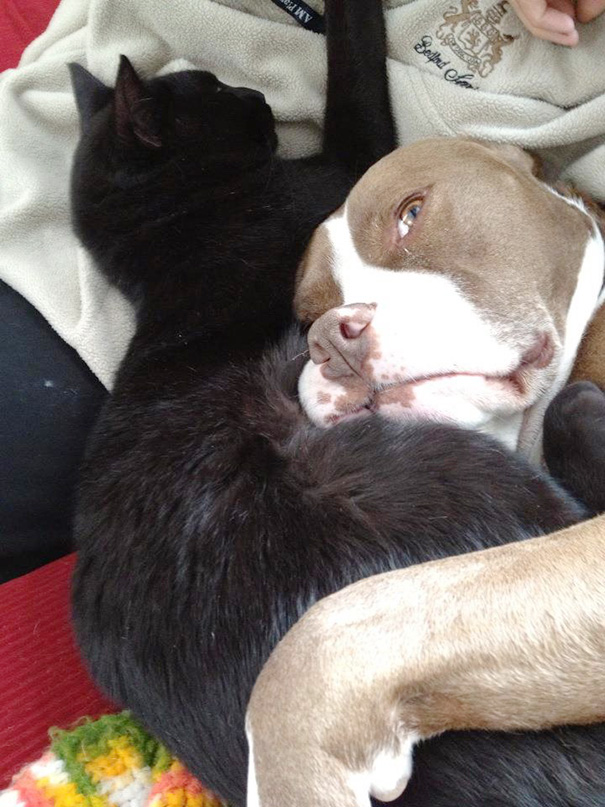 cats-and-dogs-getting-along-201__605