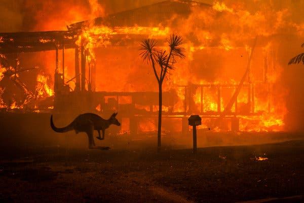 δωρεές των star για τις πυρκαγιές στην Αυστραλία